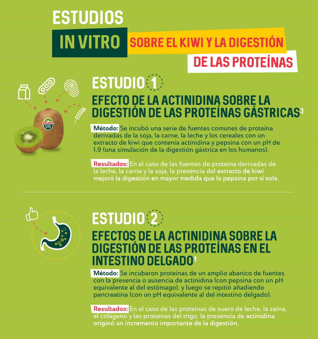 4.1.5.a-Spotlight-kiwifruit-and-protein-digestion-in-VITRO_ES.png