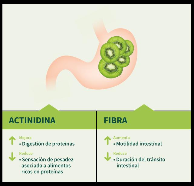 salud_digestiva_kiwi