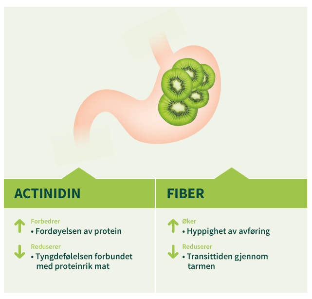 digestive_health_kiwi