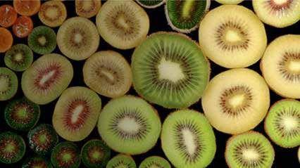 kiwi_circles.jpg